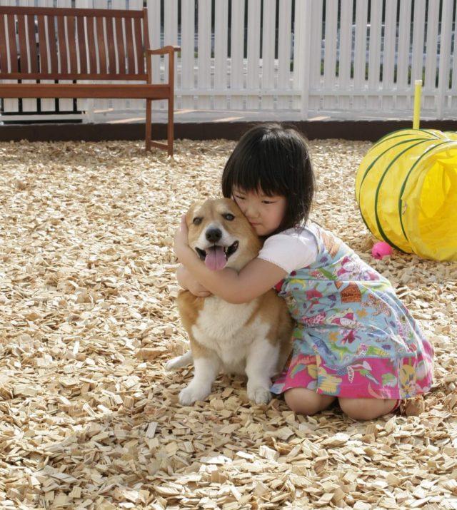 犬と子供とウッドチップ