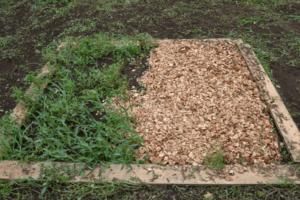 雑草抑制効果実験後